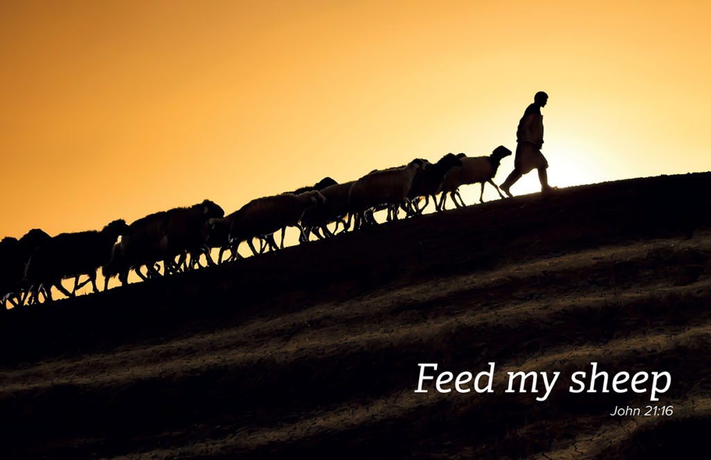 Feed My Sheep | nfcsn.org